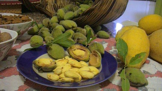 mandorle-limoni particolare